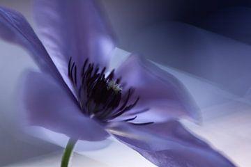 abstrakte Blüte in lila von Susanne Deinhardt