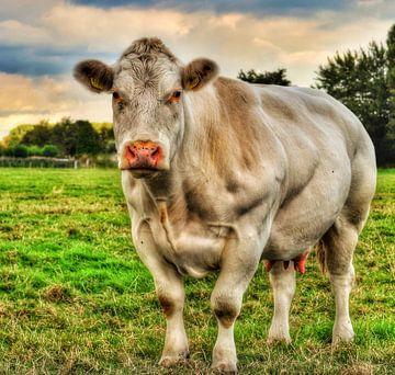 De gespierde koe. von Mariska Brouwenstijn
