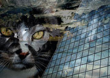 Durch das Auge einer Katze von Andreas Schulte