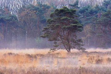 Nebel über der Heide von Tania Perneel