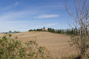 Paysage toscan avec cyprès - Photographie de paysage sur Michelle van Seters