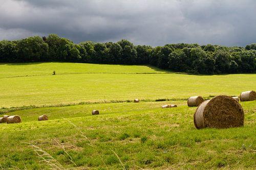 Limburgs landschap - 1