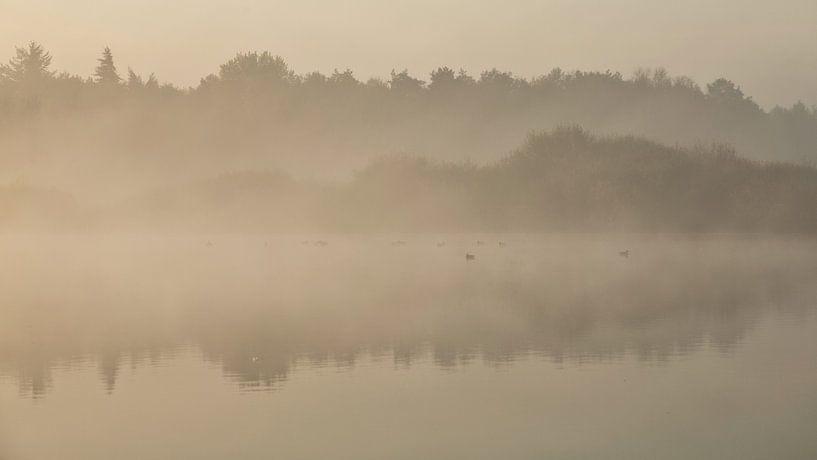 Ven in de mist. van Anneke Hooijer