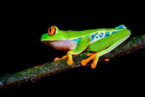 frogs van
