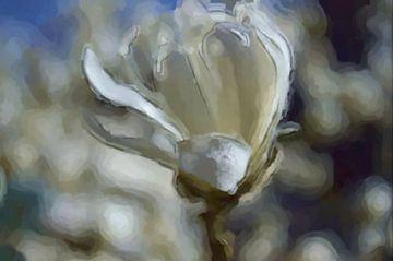Magnolie von Greta Lipman
