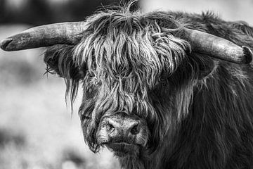 Highlander von Linda Raaphorst