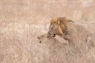 Parende leeuwen van Francis Dost