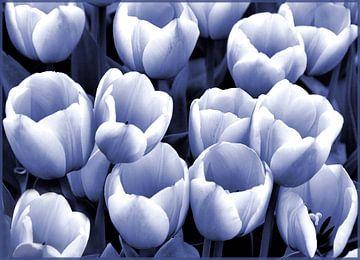 Tulpen in blauw-wit van Ina Hölzel
