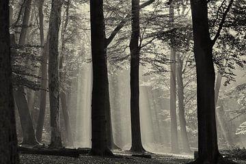 Herbst im Wald von Mrs van Aalst