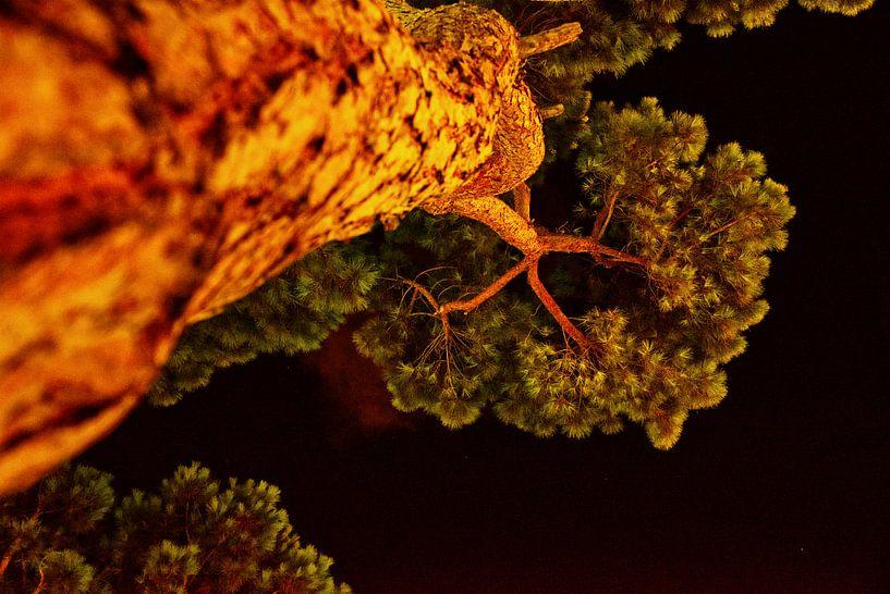 Pijnboom in de nacht van Edith van Aken