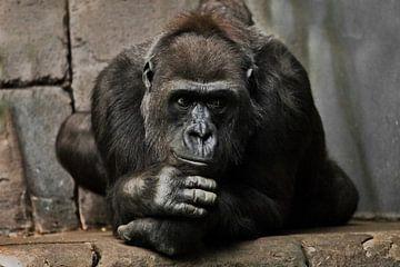 Nachdenkliche Pose, die Hand stützt seinen Kopf. Anthropoides Gorillaweibchen, ein Symbol für grüble von Michael Semenov