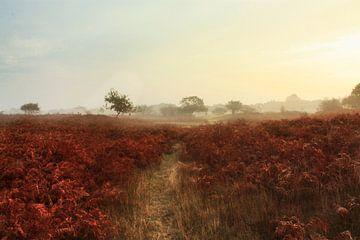 Herfst  von Jessica Wy