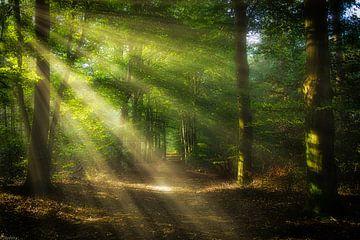 Mystic Morning van Arjen Uijttenboogaart