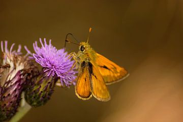 Oranje-Paars von Miranda Rijnen Fotografie