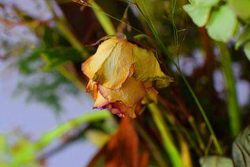 Verdroogde roos van Ton Kuijpers