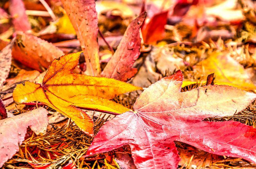 Rood en geel herfsttafereel van Frans Blok