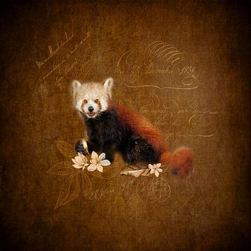 Roter Panda von Karin Schwarzgruber