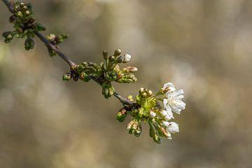 Frühlingsblüte mit Bokeh