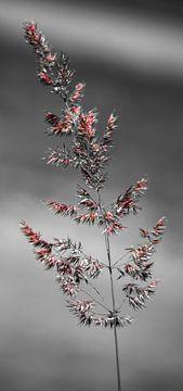 Fine nature colours van melissa demeunier