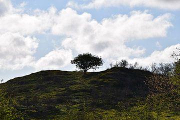 Eenzame boom van Amber van den Broek