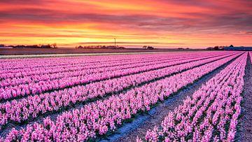 buntes Blumenfeld von eric van der eijk