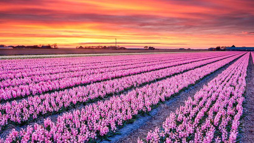 kleurrijk bloemenveld van eric van der eijk