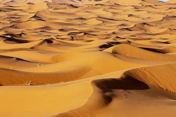 Sahara zandduinen bij zonsondergang licht op de achtergrond, Afrika van Tjeerd Kruse