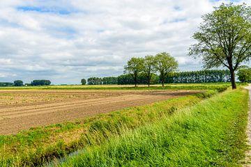 Kleurrijk agrarisch landschap in het zomerseizoen. van Ruud Morijn