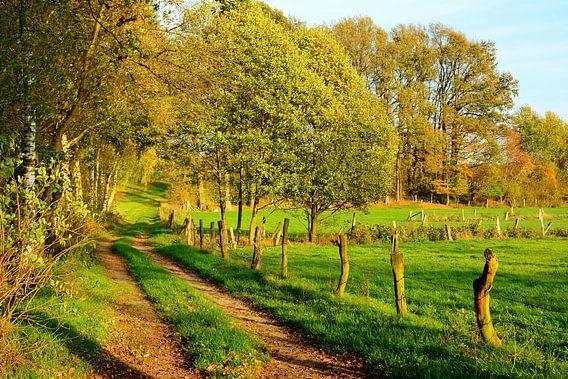 Go for an autumn walk