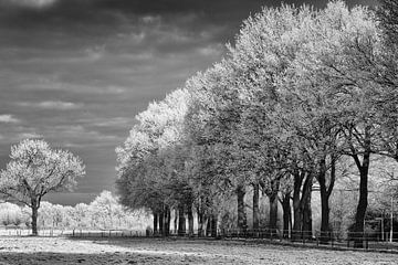 Magical winter landscape in black and white van Tonny Eenkhoorn- Klijnstra