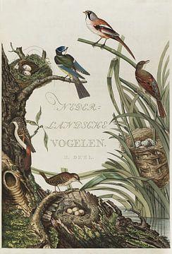 Kaft van Nederlandsche Vogelen, deel 2, Cornelis Nozeman van Teylers Museum