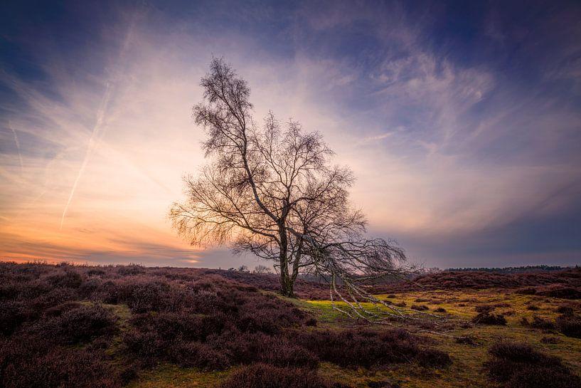 Hanging tree van Arjen Dijk
