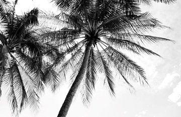 Atmosphärisches Foto von Palmen schwarz-weiß von Bianca ter Riet