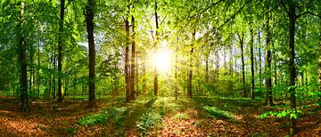 Sonne und Wald von Günter Albers