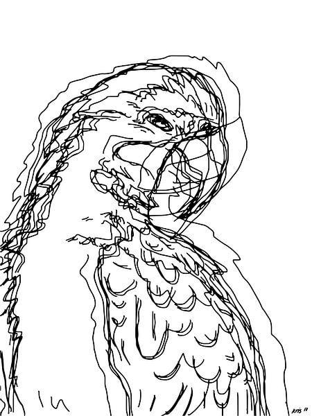 Papegaai van Kris Stuurop