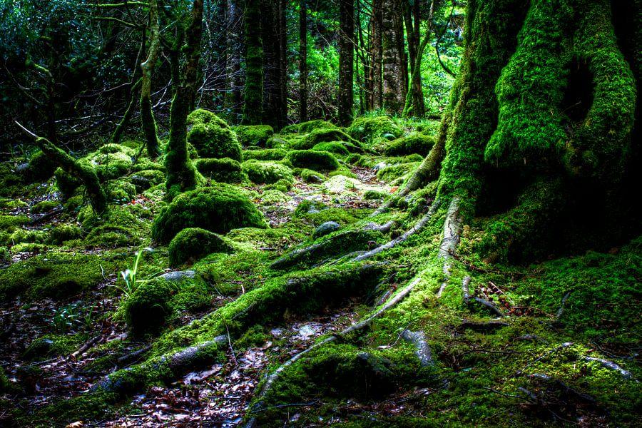 Forest, Killarney National Park, Ireland van Colin van der Bel