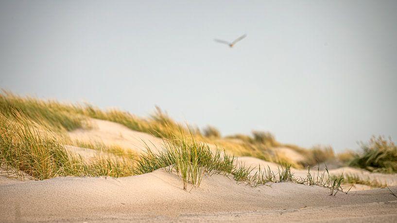 Duinen van Petten aan Zee tijdens de avondzon van Martijn van Dellen