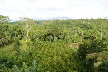 Koffie planten in Bali van Esther Kruik