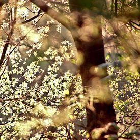 Zonlicht op jong groen in de Lente van Elbert Brethouwer