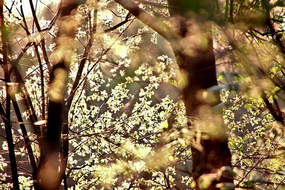 Zonlicht op jong groen in de Lente
