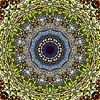Pear Blossom van Frans Blok thumbnail