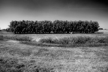 Baumreihe mit einer Kuh im Biesbosch von Peter Baak