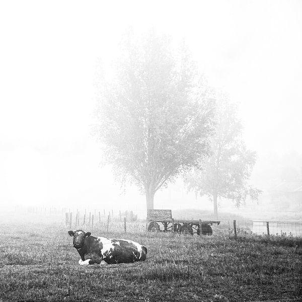 Koe in de mist 1 van Jacqueline Koster