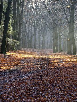 Zonnestralen of zonneharpen in bos. van Leo Quartel