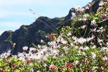 Schoonheid van de bergen van Nina Rotim