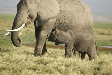 baby olifantje drinkt bij mama van Laurence Van Hoeck