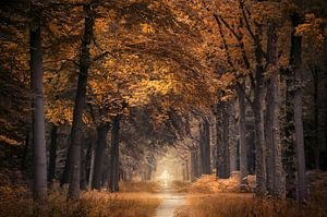 The autumn walk