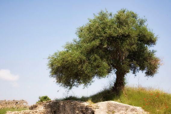 Eenzame boom