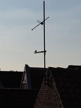 Vogel op antenne tijdens zonsondergang van Stephan Smit