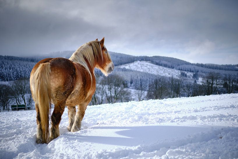 Pferd im Schnee von Björn Jeurgens